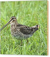 Smiling Snipe Wood Print