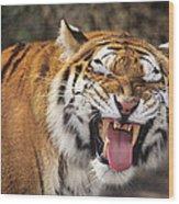 Smiling Tiger Endangered Species Wildlife Rescue Wood Print
