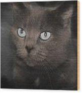 Smokey Cat Wood Print