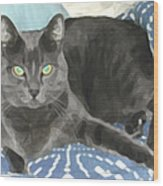 Smokey On A Blue Blanket Wood Print
