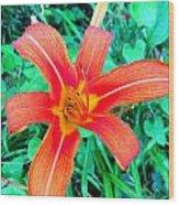 Smokie Mountian Wild Flower Wood Print