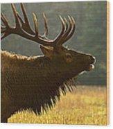 Smoky Mountain Bugle Wood Print
