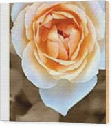 Smooth Angel Rose Wood Print