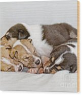 Smooth Collie Puppies Taking A Nap Wood Print