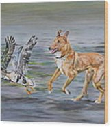 Smooth Collie Trying To Herd Geese Wood Print