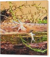 Smooth Or Common Newt  Wood Print