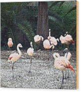 Smudgestick Flamingos Wood Print