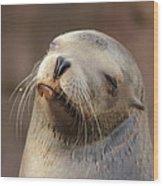 Smug Sea Lion Wood Print