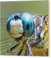 Snack Time Dragonfly Wood Print