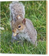 Snack Time For Squirrels Wood Print
