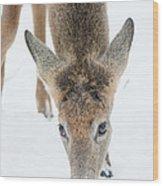 Snacking Deer Wood Print