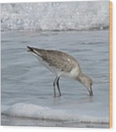 Snacking Sandpiper Wood Print