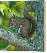 Snacking Squirrel Wood Print