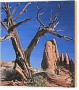 Snag At  Fiery Furnace Labyrinth Arches Wood Print