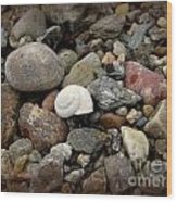 Snail Among The Rocks Wood Print