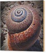 Snail Beauty Wood Print