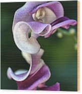 Snail Flower Wood Print