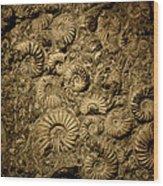 Snail Fossil Wood Print