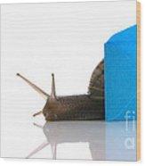 Snail Next To Miniature Mail Envelope Wood Print