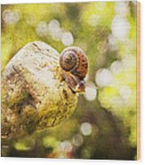 Snail Of A Time Wood Print