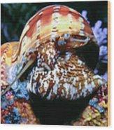 Snails 1 Wood Print
