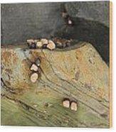 Snails Converge Wood Print