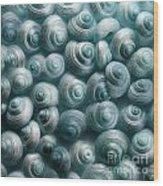Snails Cyan Wood Print by Priska Wettstein