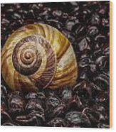 Snailshell In Tamarind Bed Wood Print