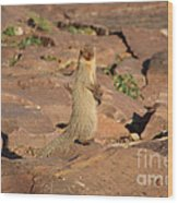 Mongoose Or Snake Eater Wood Print