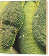 Snake In Green Dress Wood Print