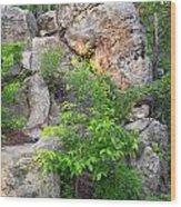 Snake Rock Wood Print