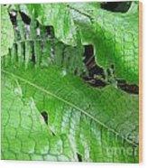 Snake Skin Plant Wood Print