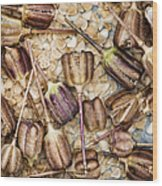 Snakes Head Fritillary Flower Seeds Pattern Wood Print