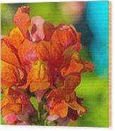 Snapdragon Flower Blurred Background Wood Print