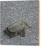 Snapping Turtle 3 Wood Print
