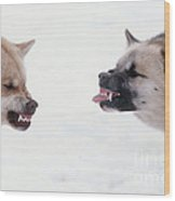 Snarling Huskies Wood Print
