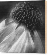 Sneezeweed Wood Print