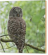 Snooze Time - Owl Wood Print