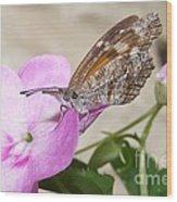 Snoutnose Butterfly Wood Print