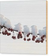 Snow And Berries Wood Print