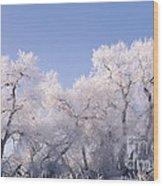 Snow And Ice Blanket Cottonwood Trees Wood Print