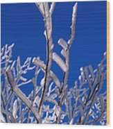 Snow And Ice Coated Branches Wood Print