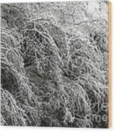 Snow And Ice Covered Trees At The Base Of Niagara Falls Wood Print
