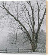 Snow And Pecan Tree Wood Print