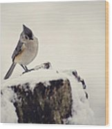 Snow Bird Wood Print