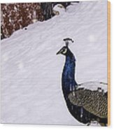 Snow Bird Wood Print