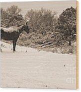 Snow Bound Horse Wood Print