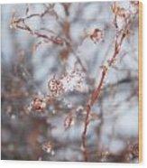 Snow Branch Wood Print