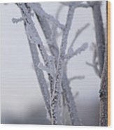 Snow Branches Wood Print by Krista Sidwell