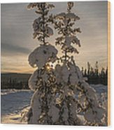 Snow Capped Sitka Spruce Wood Print